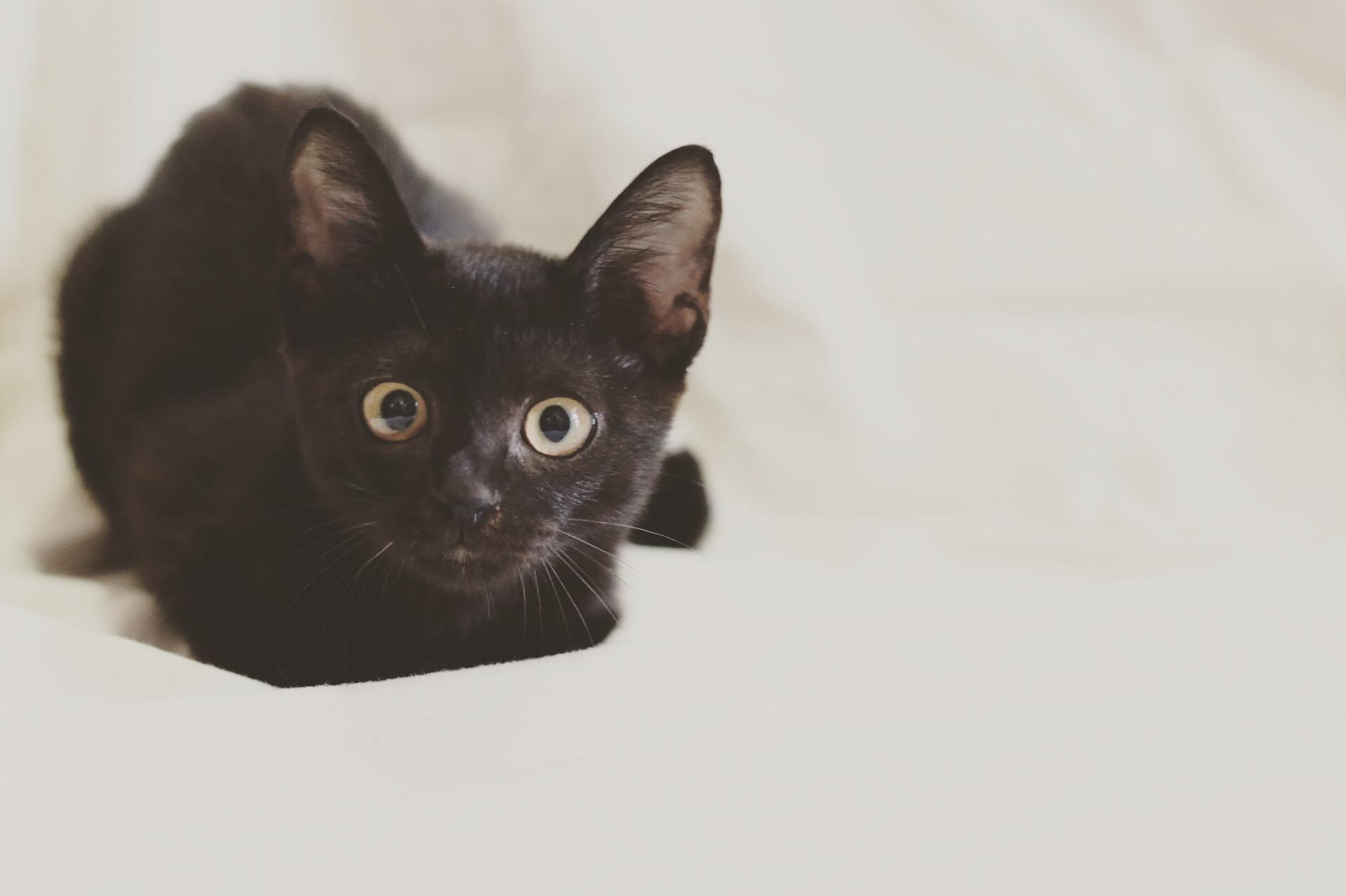 """""""インスタ映えしない""""黒猫がわが家に来てくれた意味。写真家tomoさん"""