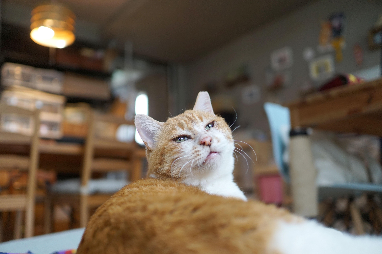 始まりは1杯のコーヒー。シェルターから保護猫の魅力を発信するLOVE & Co.