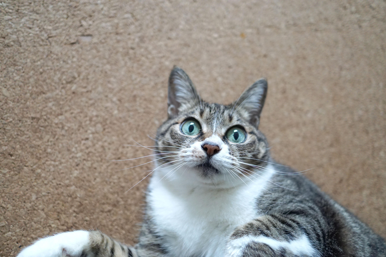 大阪北部地震で体調を崩す猫。どう対応すれば?服部幸先生に訊く