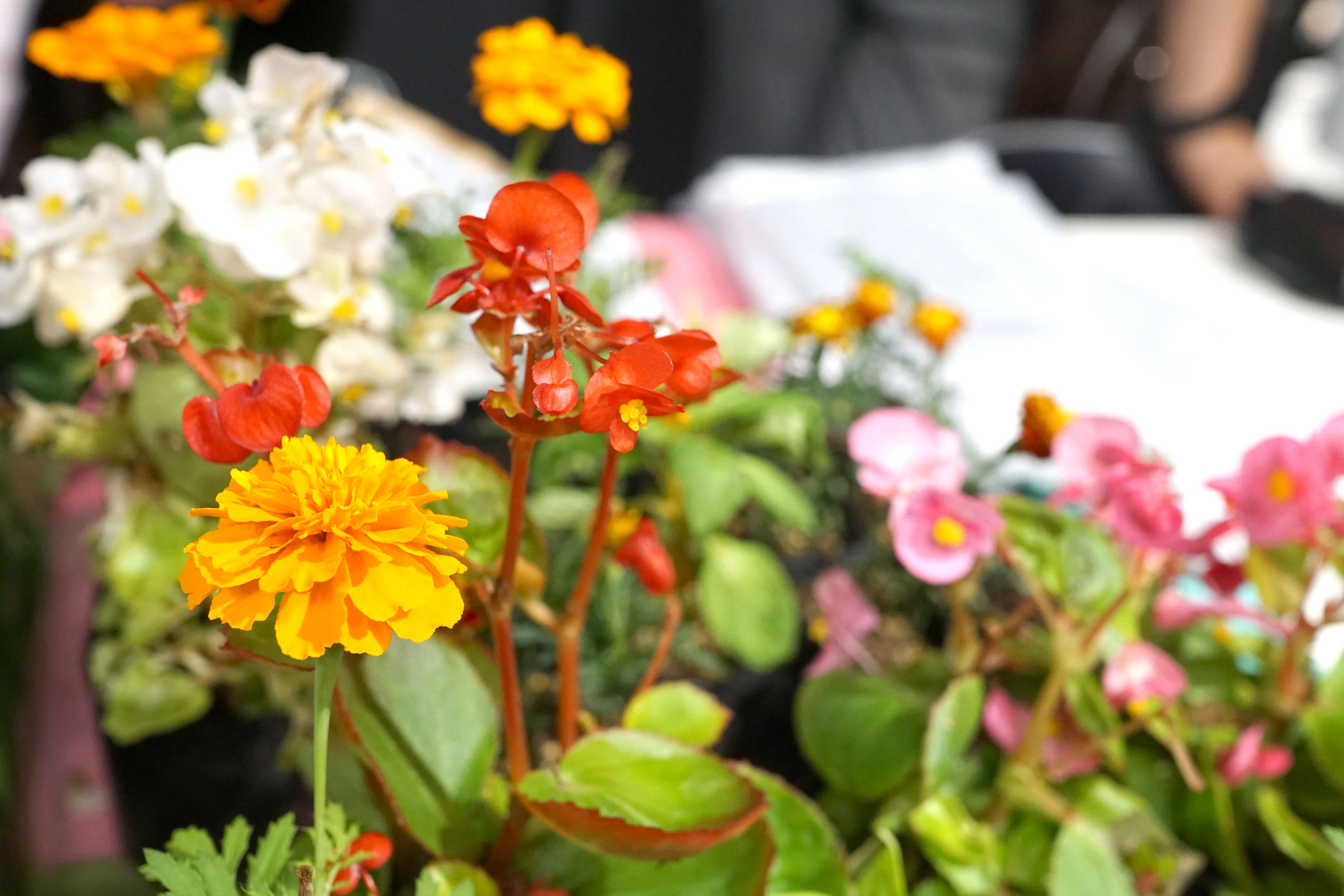 殺処分された犬猫の骨を土に還し花を咲かせる。青森の高校生が取り組む「命の花プロジェクト」