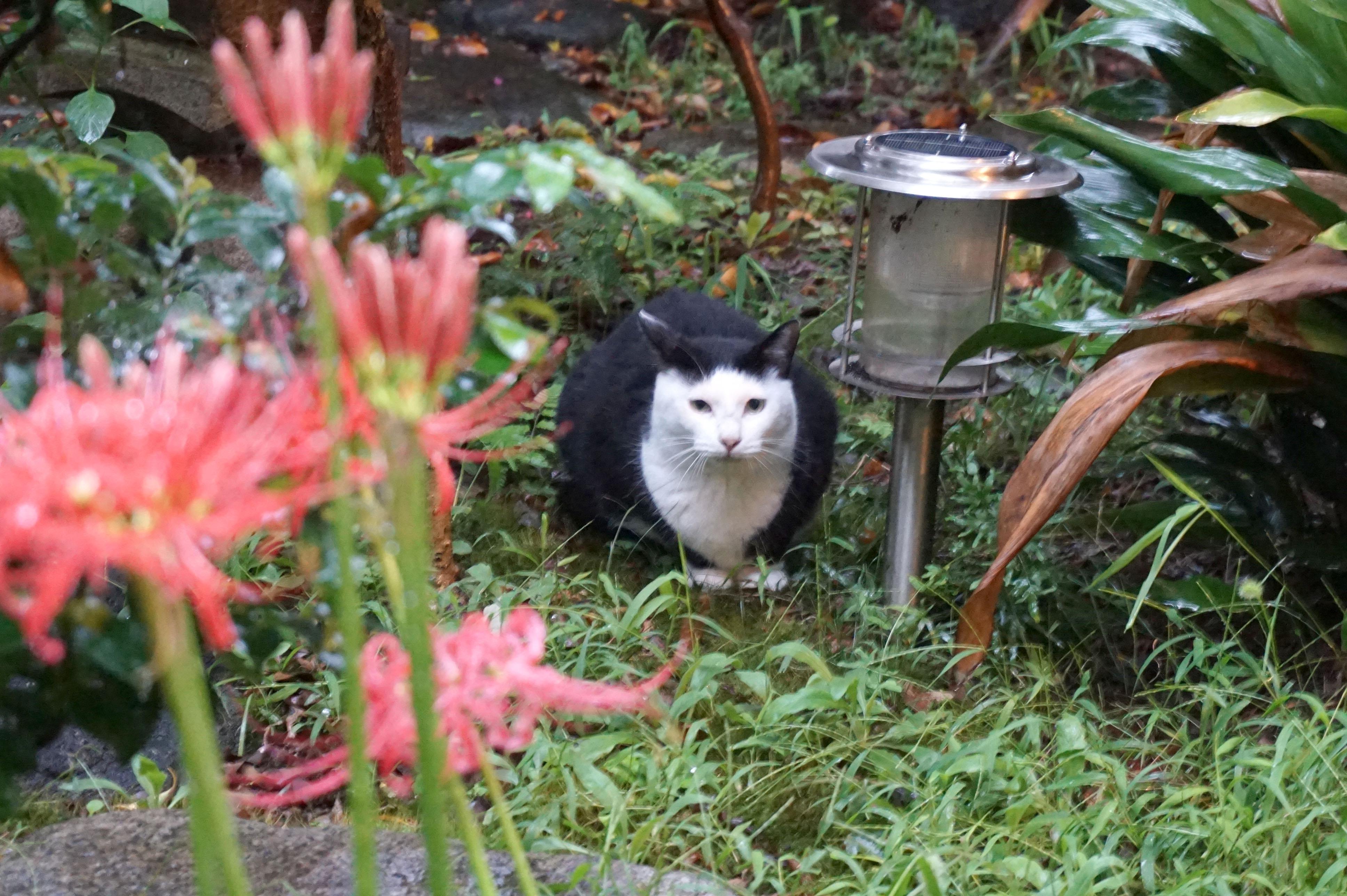 地域猫活動って?  ノラ猫はそもそもどこから来るの? 「ねりまねこ」講演(1)