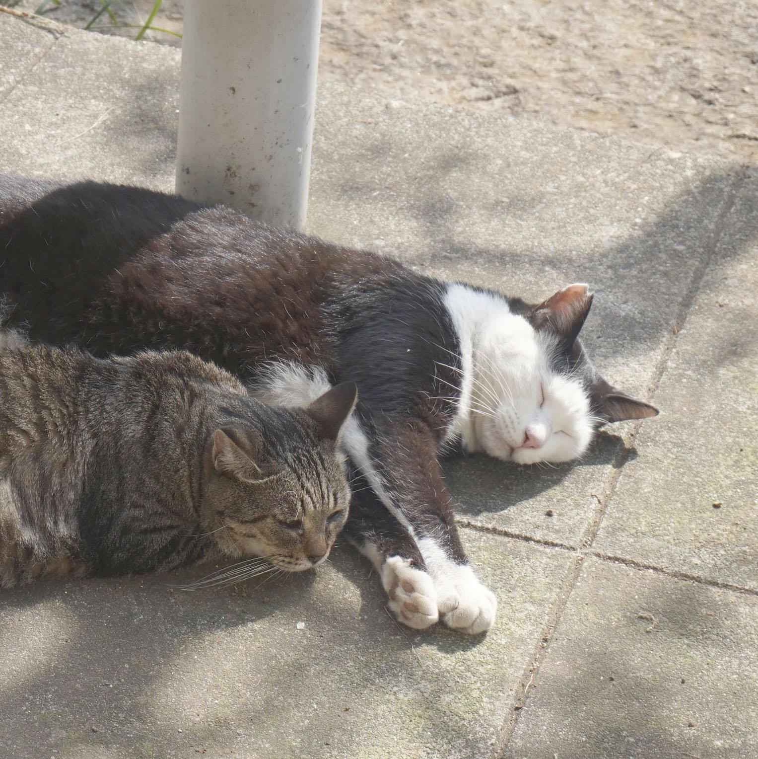 地域猫活動は置き去られた猫のセーフティネット 「ねりまねこ」講演(3)
