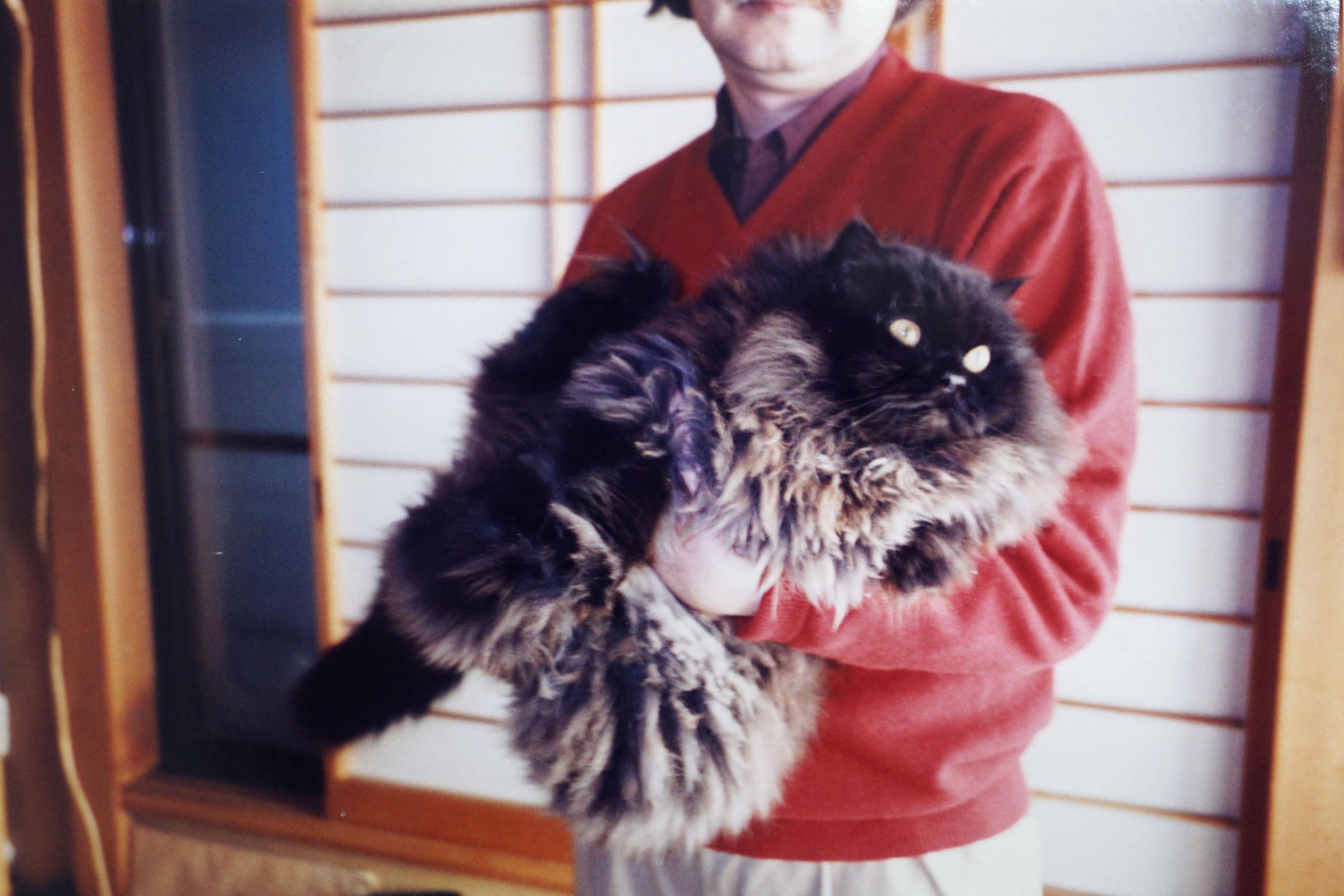 原画&写真公開。谷口ジローさん『犬を飼う。そして…猫を飼う』愛犬の介護、保護猫との暮らし