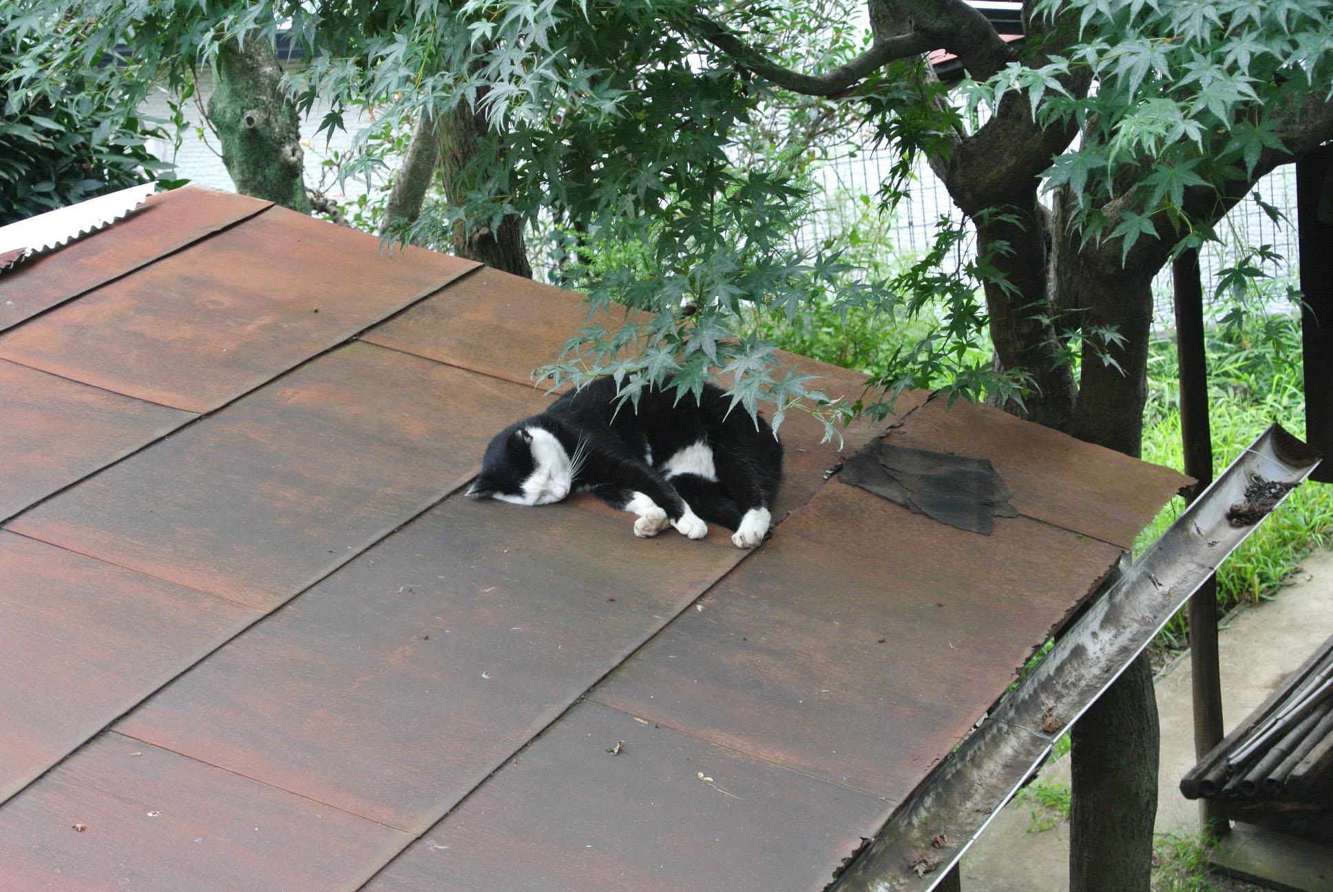 地域猫活動をうまく進めるのに一番大切なこと 「ねりまねこ」講演(2)