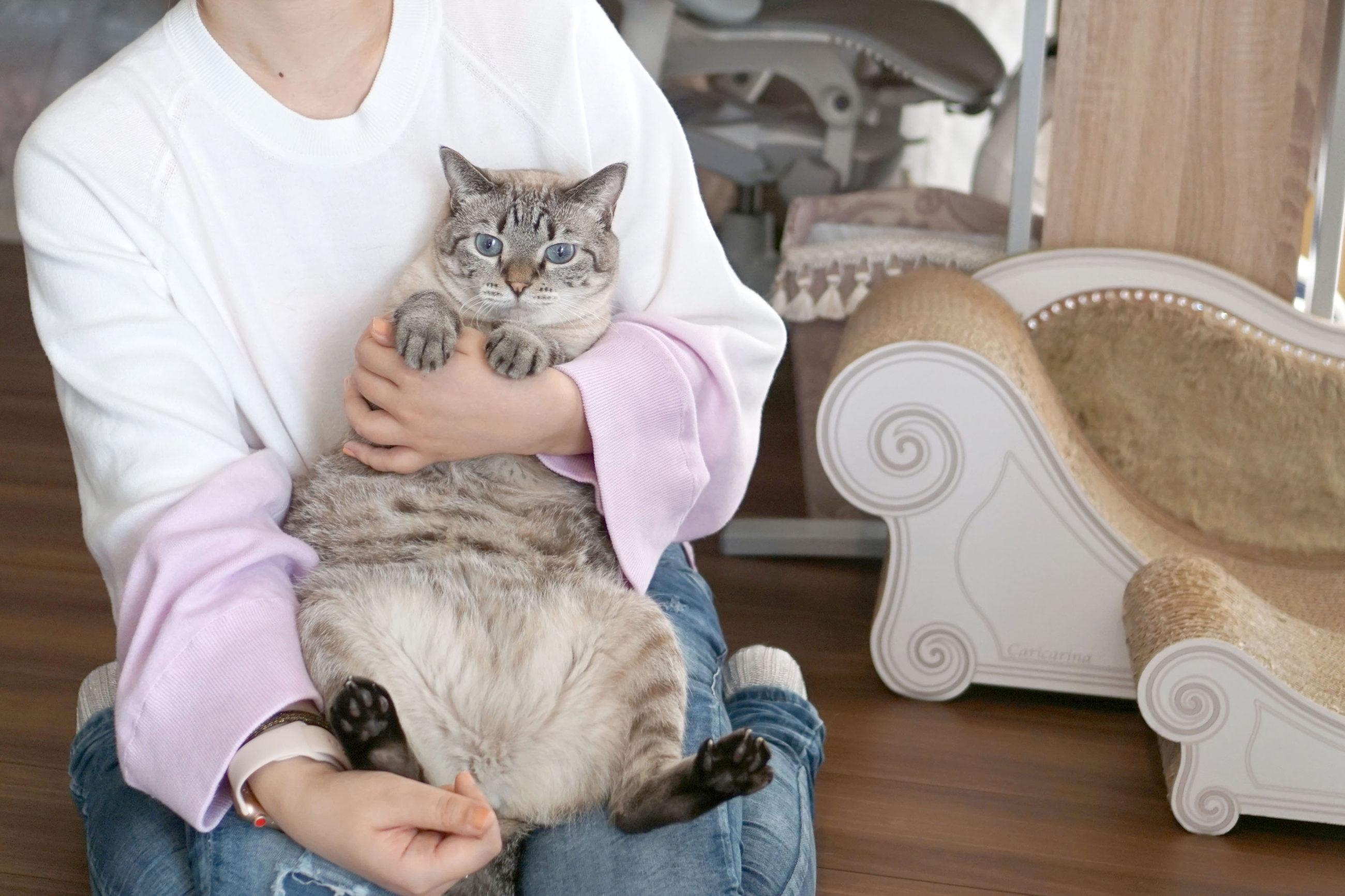 被災地のノラ猫と過剰繁殖の場から救出された猫を迎えて。漫画家・横槍メンゴさん(1)